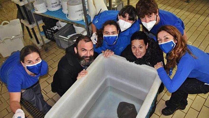 La família d'Oceans creix amb dues noves ratlles a l'aquari