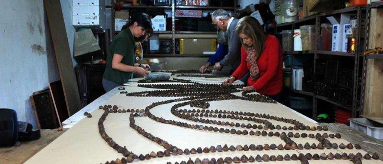 """Varios voluntarios de """"El Pampillo"""" realizan los perfiles de las alfombras con los concos de eucalipto."""