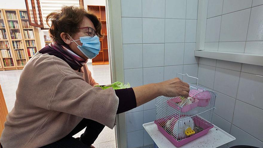 Empieza el reparto de ratones para las trampas a las serpientes
