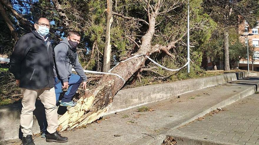 El fort vent evidencia el mal  estat de l'arbrat de la Balconada