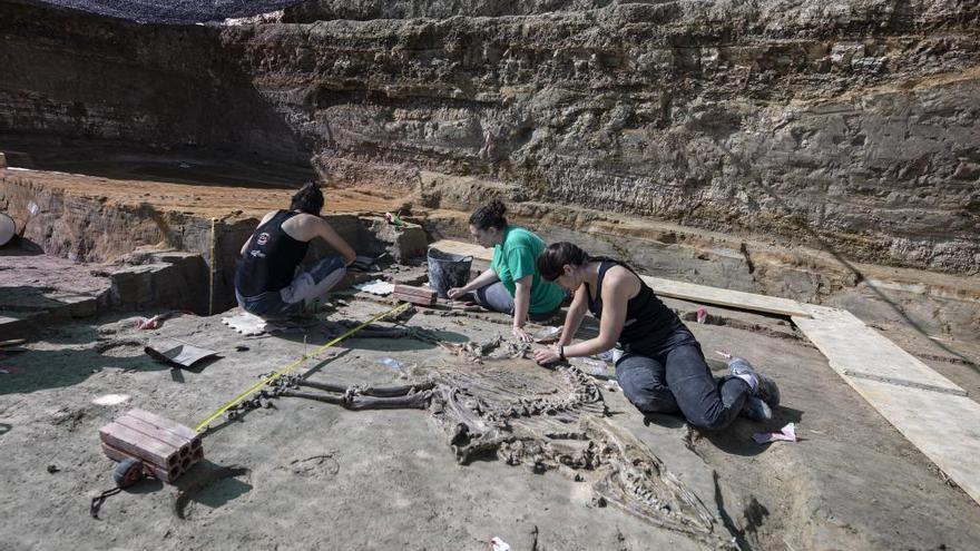 Troben l'esquelet d'un bòvid de fa 3 milions d'anys al Camp dels Ninots de Caldes