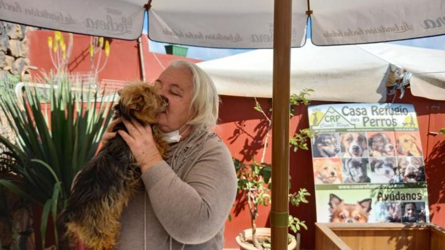 Los refugios de animales de Tenerife resisten a la caída del respaldo social