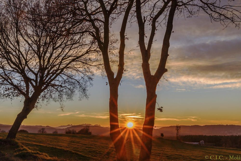 Moià. Espectacular posta de sol en la qual es pot observar com els rajos de sol s'escolen entremig de dos arbres i creen un efecte d'una gran bellesa.
