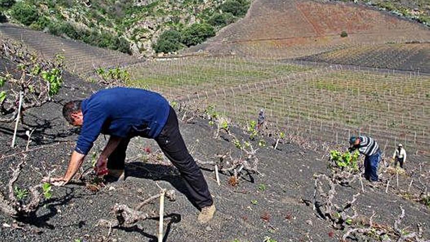 El centro de la Isla promueve una ruta botánica entre vinos y volcanes