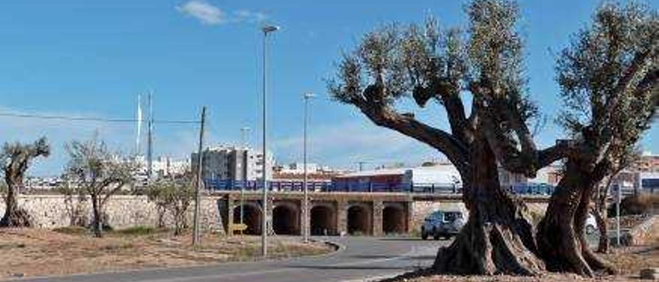 La CHJ multa a Vinaròs con 600 euros por retrasarse en retirar los olivos del Servol