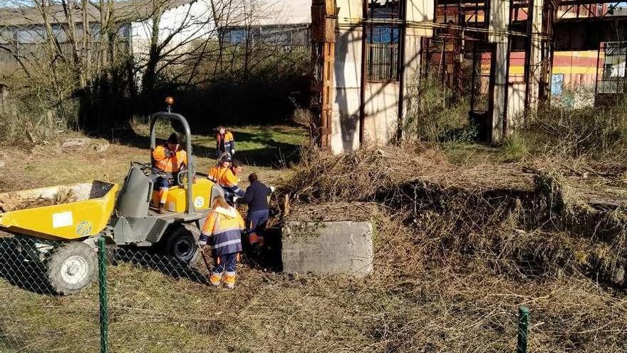 El Ayuntamiento elimina las plantas invasoras de Talleres del Conde