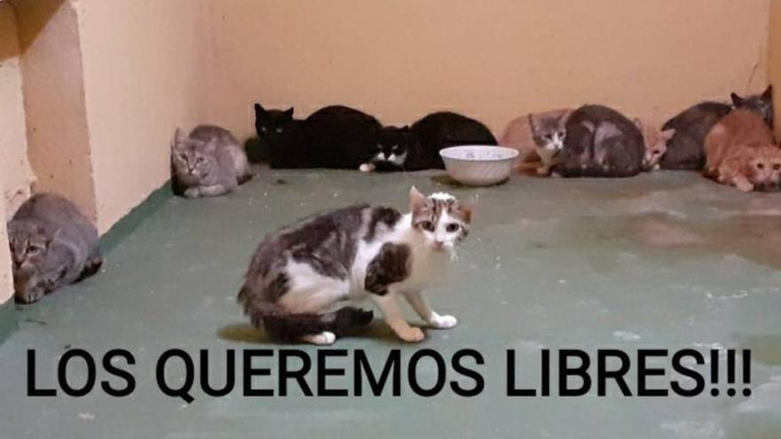 """Más de 7.500 firmas piden que se eliminen las """"jaulas ocultas"""" de gatos en Son Reus"""