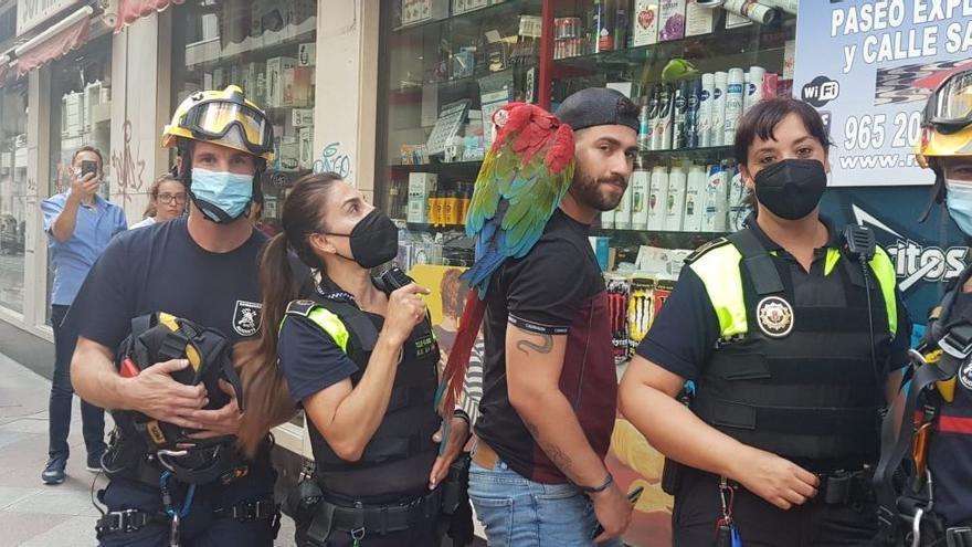 Los bomberos rescatan a un loro que se escapó de su dueño en Alicante