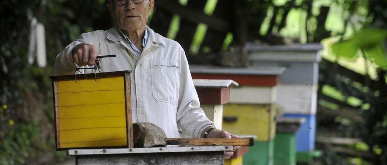 El apicultor Luis Gutiérrez trabaja en sus colmenas de Piñera, en Lena.