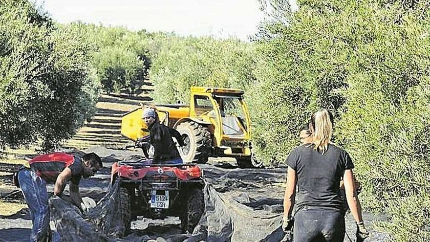 La Junta concede más de 9 millones de euros a entidades locales para obras del Plan de Fomento del Empleo Agrario
