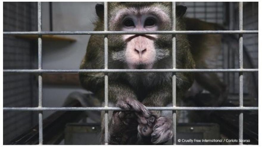 Clausurado un laboratorio de investigación animal por presuntos malos tratos