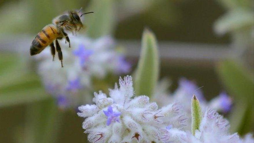 Fallece un hombre tras tragarse una abeja mientras iba en bicicleta en Valencia