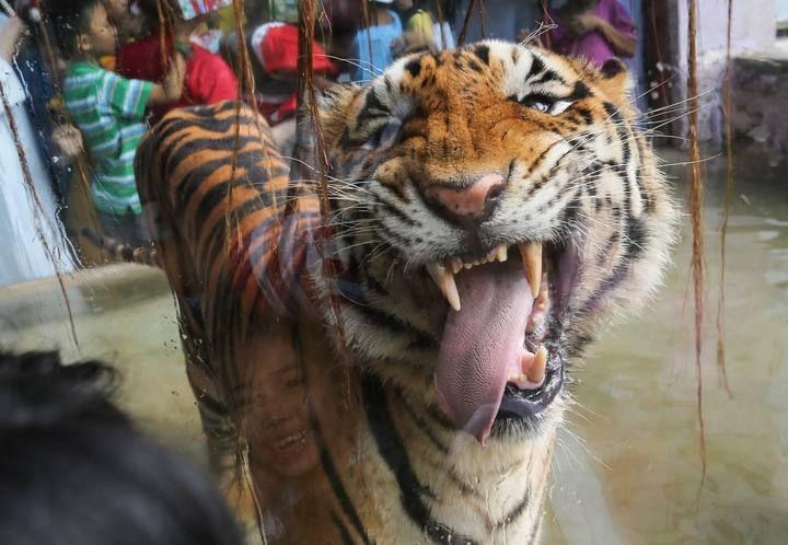Las 15 fotografías de animales más curiosas del 2015