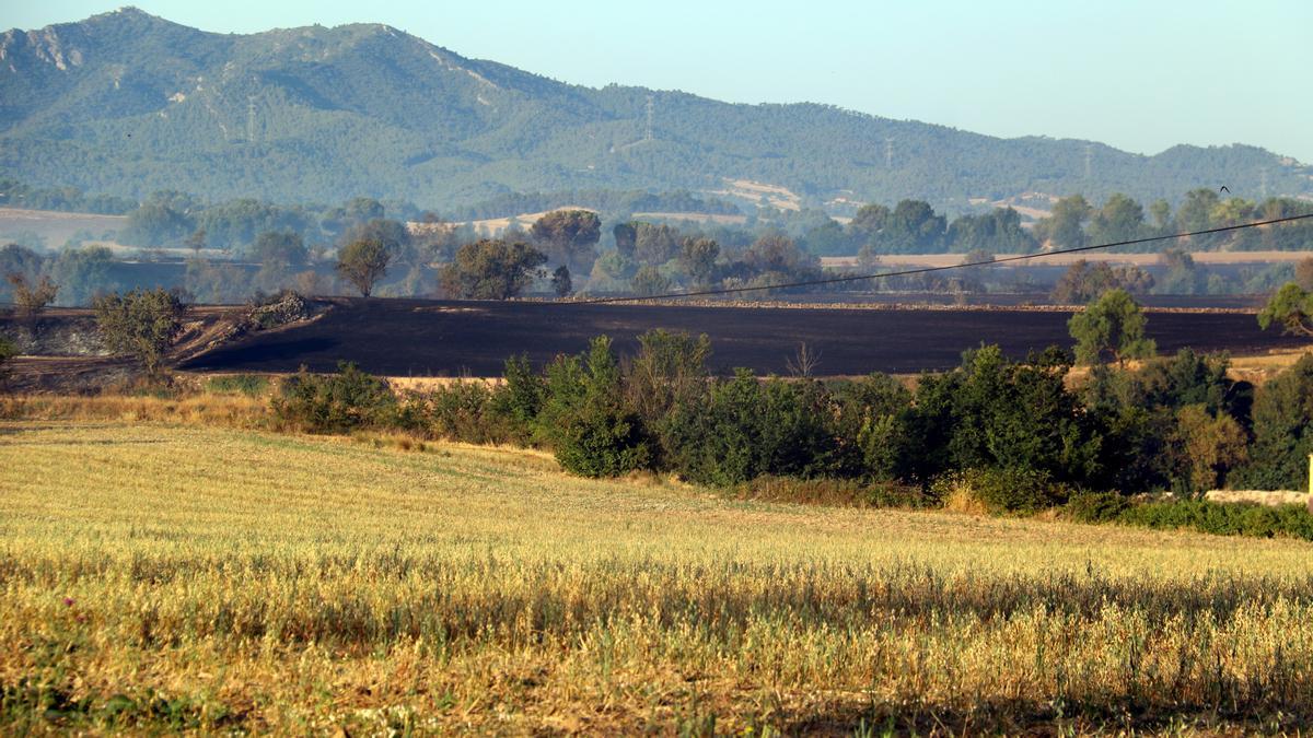 Pla obert d'un camp cremat en l'incendi de Santa Coloma de Queralt que ja ha cremat unes 1.100 ha, el 25 de juliol de 2021. (Horitzontal)