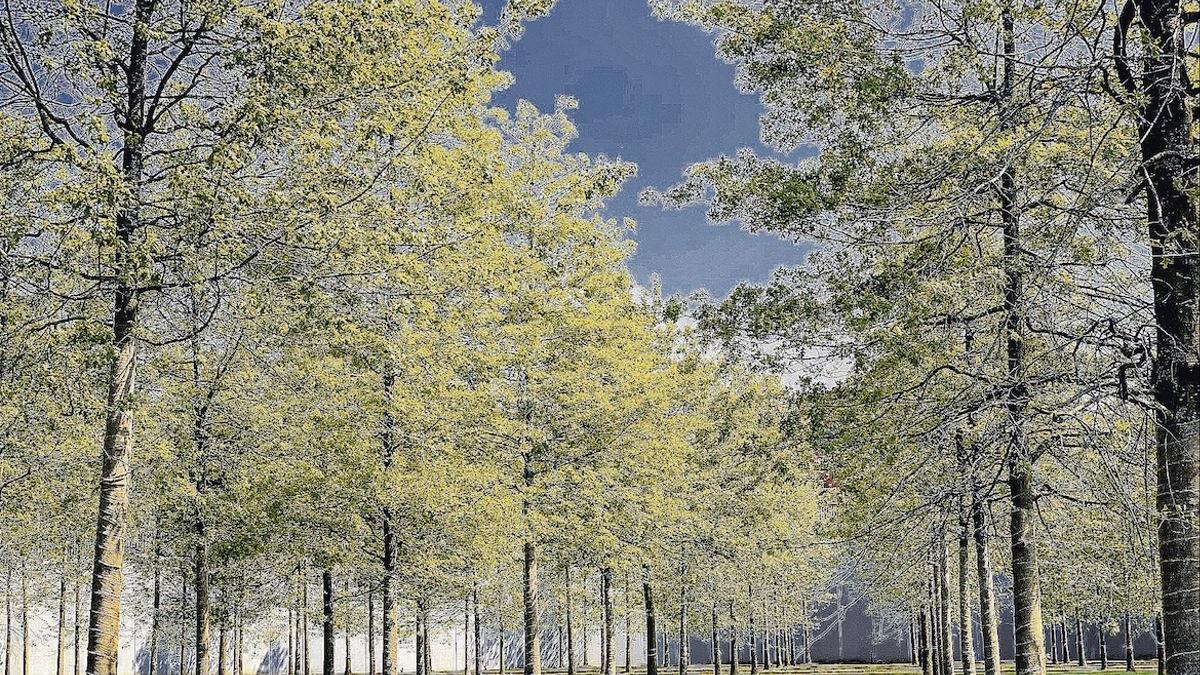 Aposta per l'economia circular per protegir la biodiversitat