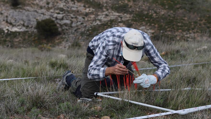 """El proyecto """"Adopta una planta"""" indica que la dinámica de las plantas amenazadas en Aragón es estable"""