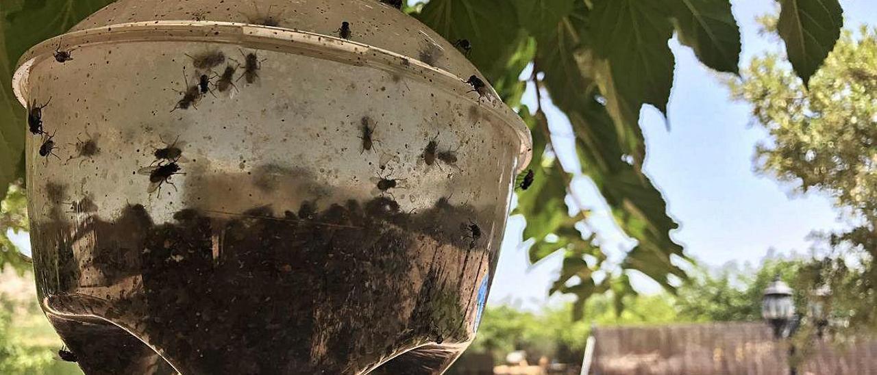 Cientos de moscas revoloteando en una casa de campo situada en las inmediaciones. ÁXEL ÁLVAREZ