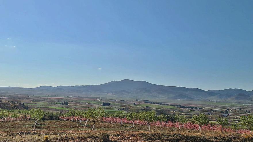 Acaba la regularización de parcelas de cultivo en el Monte de La Cuesta