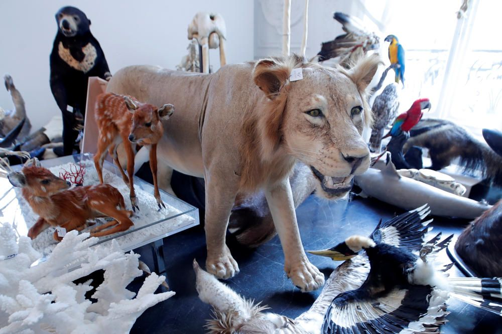A stuffed lion is seen ahead of an auction at ...