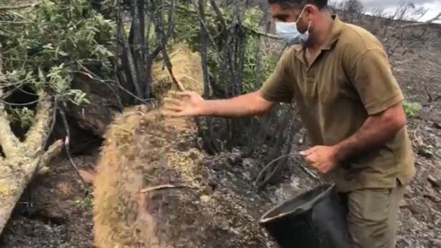 Los cazadores llevan alimento a los animales en el coto de Domez, arrasado por el incendio de Lober