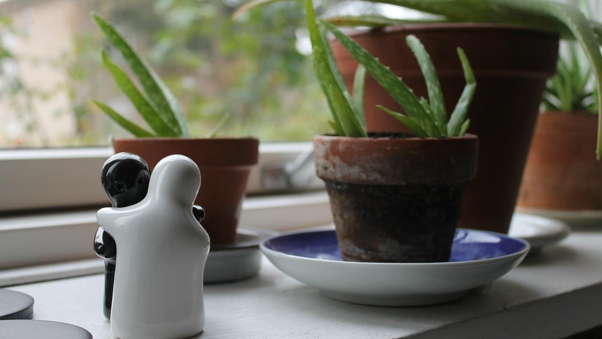 Seis plantas que purifican el aire de tu casa