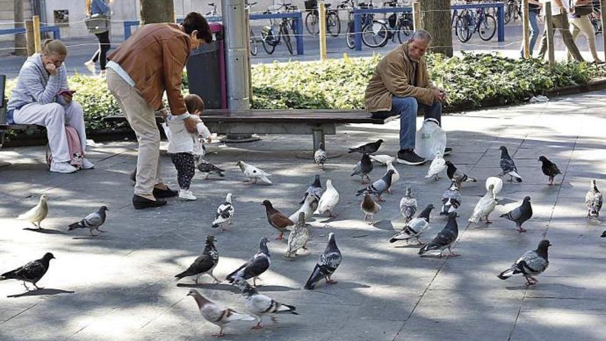 Hier überall werden in Palma de Mallorca Tauben gefüttert