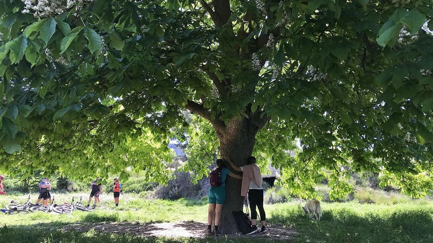 Un árbol para peregrinar