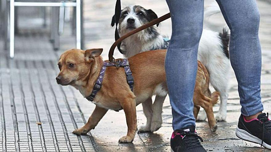 Incitar a un perro a atacar a una persona supondrá una multa de más de 2.400 euros