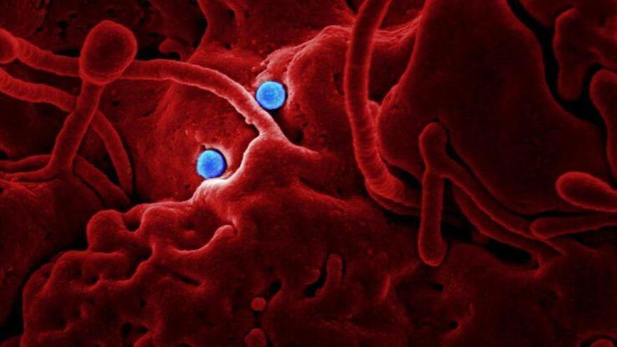 La física cuántica colabora en la lucha contra las infecciones y el cáncer