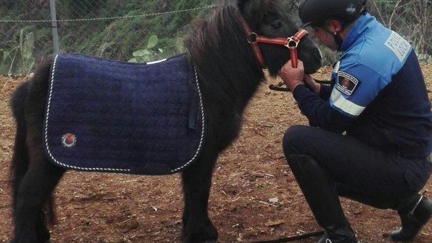 La Policía Local bromea con la adopción del pony 'Pilar'