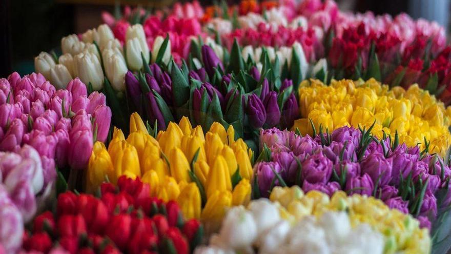 Las flores y su significado: el mejor homenaje para aquellos que ya no están