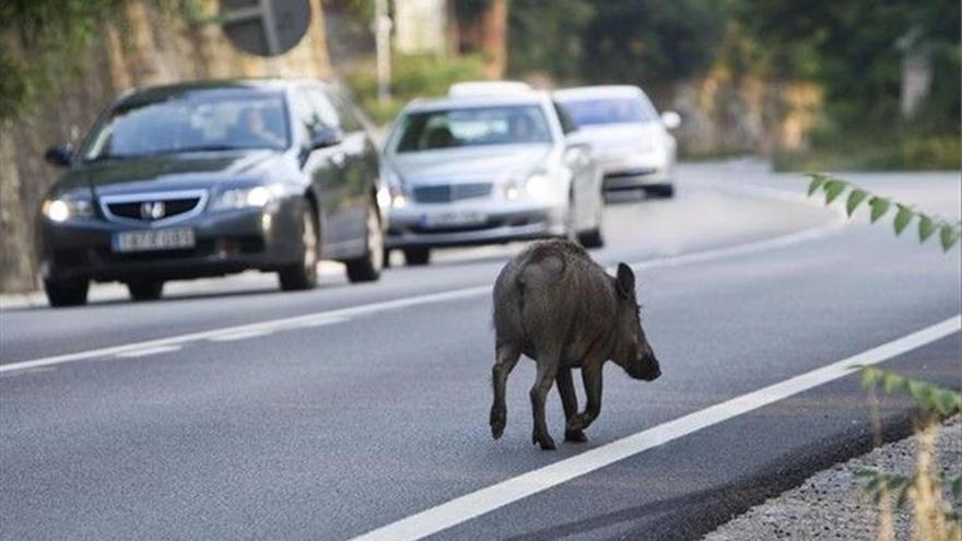 Los animales causan 22 accidentes de tráfico cada semana - El Periódico  Extremadura