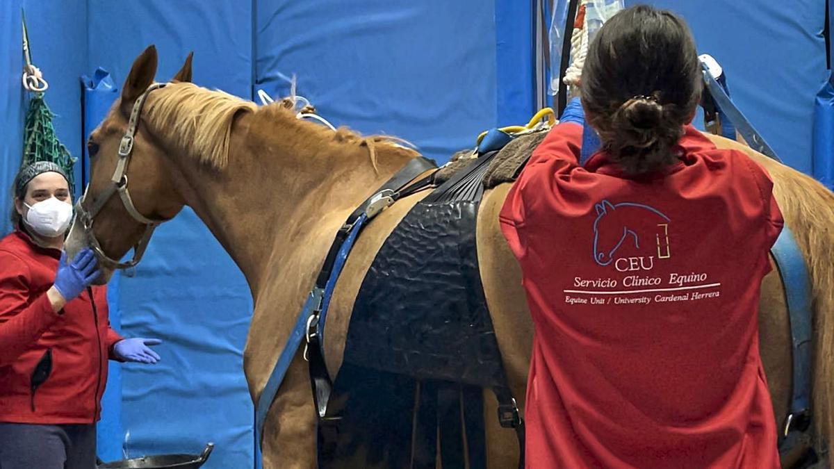 Agricultura suspenderá la movilidad de caballos en ferias y certámenes