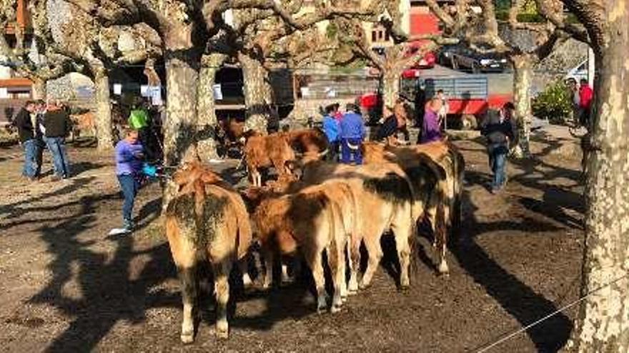 La feria de Santa Margarita reúne en Porrúa más de cien vacas