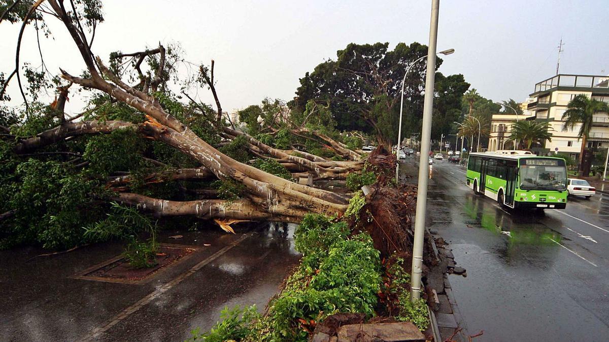 Árboles caídos en la avenida de Anaga, en Santa Cruz de Tenerife, tras el paso del temporal Delta.     E.D.