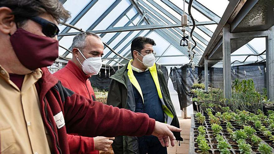 El jardín botánico del Parque Nacional del Teide desarrolla semillas de 200 especies