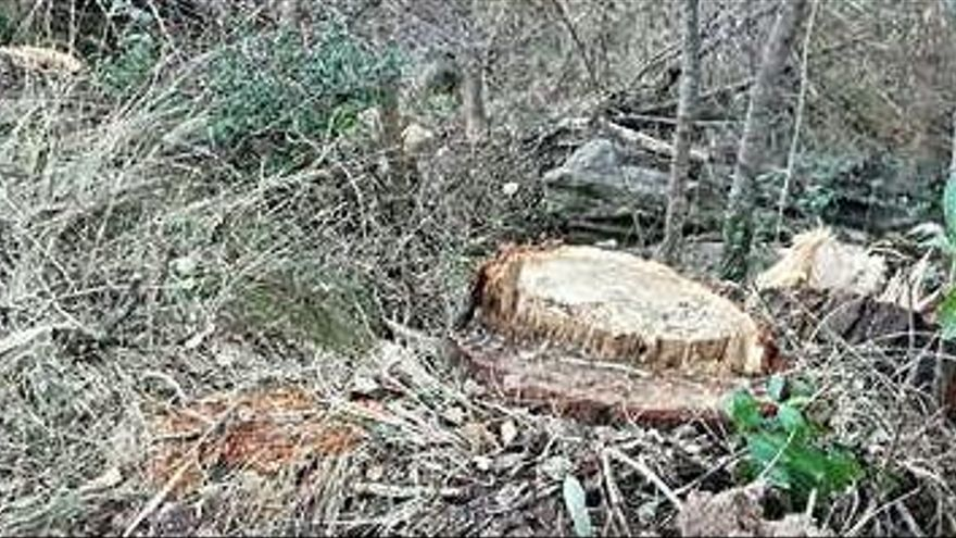 Meandre diu que a Rajadell van talar arbres de gran port sense permís de l'ACA