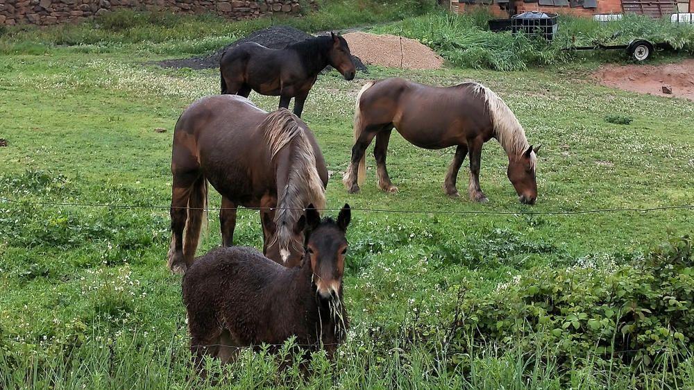 Cavalls sota la pluja.