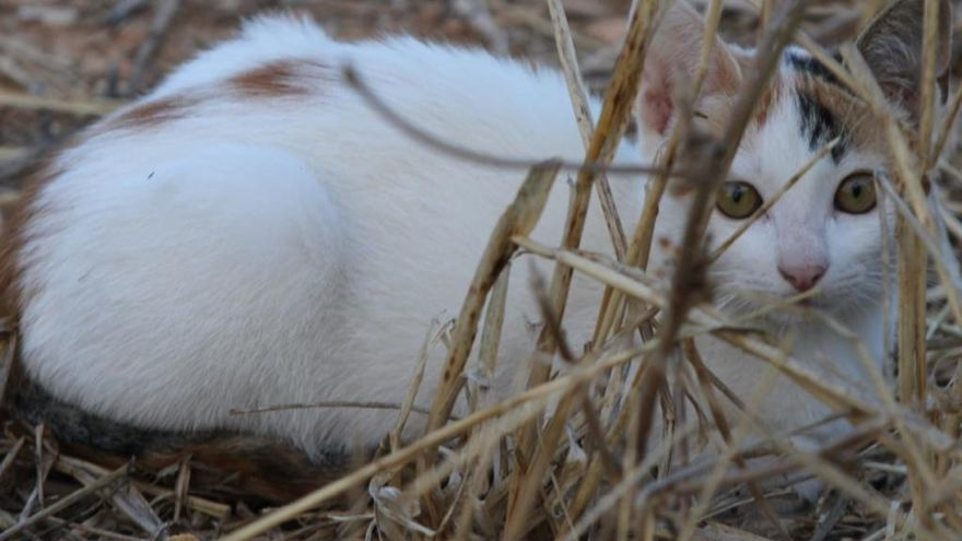 Tierheim Son Reus schläferte 2019 aus Platzgründen 188 Katzen ein