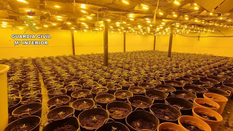 Desmantelan una plantación de marihuana en Almassora que consumía 40.000 euros de luz al mes