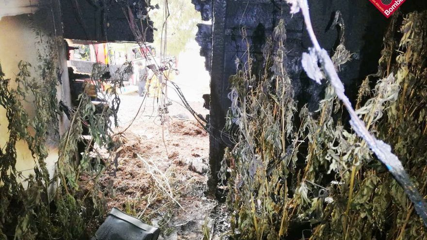Un incendio destapa una plantación de marihuana en Crevillent