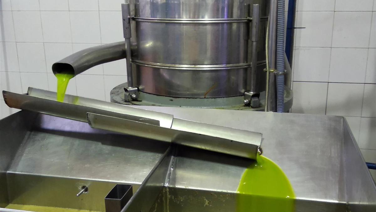 Extracción de aceite en una almazara situada en Priego.