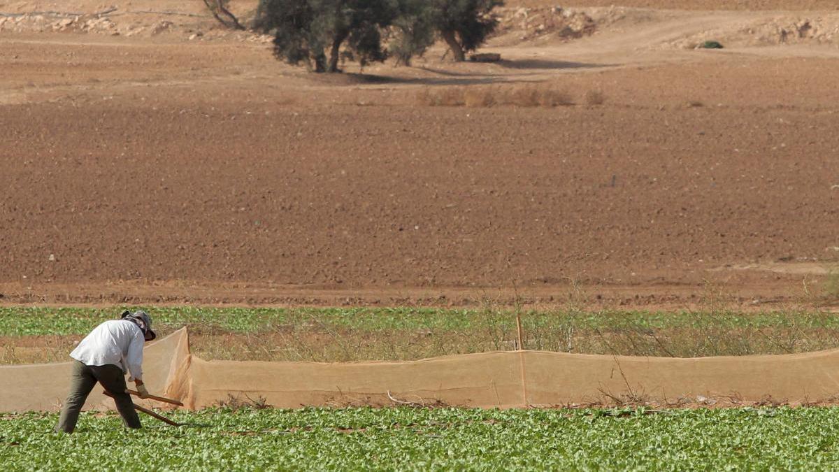 Firman el 65% de contratos del sector agroalimentario