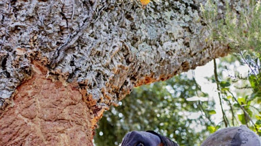 La nord-americana Michele Curel homenatja els peladors de suro  a Palafrugell
