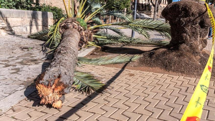 Frau von Palme erschlagen: Stadt Palma inspiziert Bäume