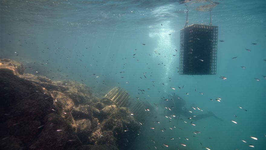 El Club Nàutic Sant Feliu de Guíxols serà el primer port d'Espanya que instal·larà biohuts