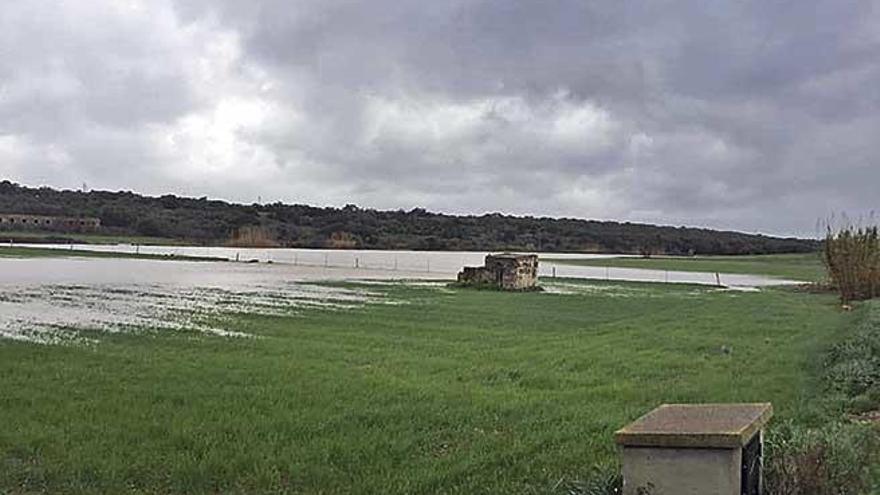 El campo mallorquín se beneficia de la lluvia aportada por la borrasca 'Gloria'