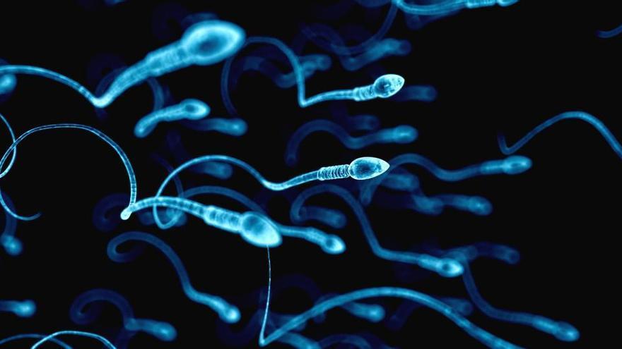 Los espermatozoides humanos no nadan de la forma que se creía