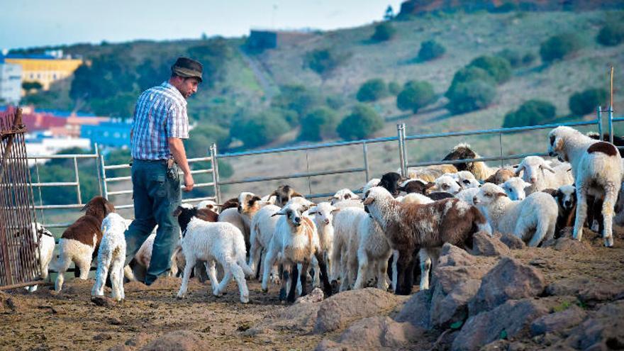Asociaciones agrarias canarias piden un plan de rescate urgente para el sector ganadero