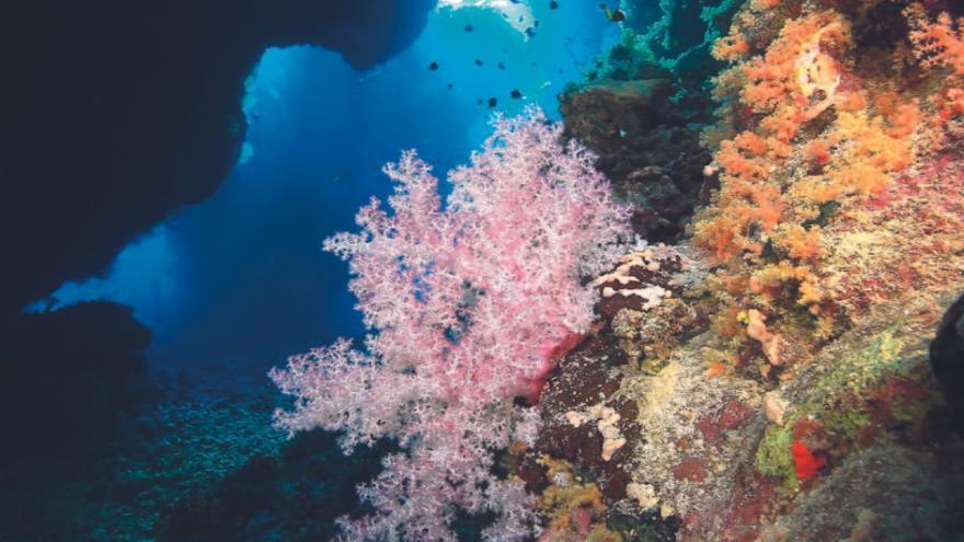 ¿Qué es lo que está matando a los arrecifes de coral?